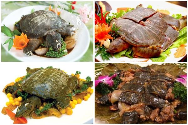 Cách chế biến những món ăn ngon khó cưỡng từ ba ba.
