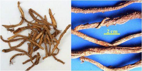 Hình ảnh rễ cây phòng phong