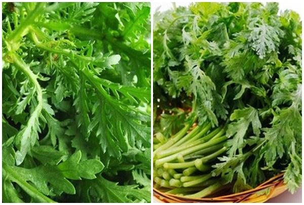Thành phần dược chất của cây cải cúc và tác dụng của cây cải cúc