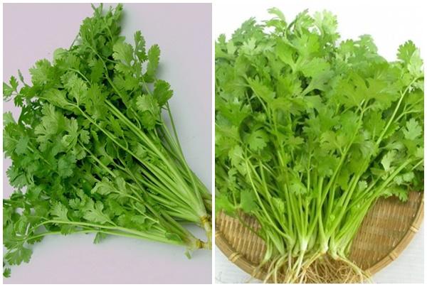 Đặc điểm nhận biết cây rau mùi là gì và tác dụng của rau mùi