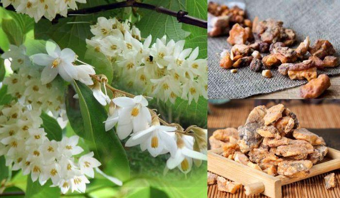 Tác dụng của an tức hương và cách dùng an tức hương chữa bệnh
