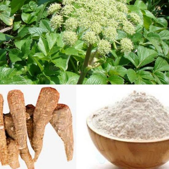 Tác dụng của rễ bạch chỉ giúp kháng viêm, giảm đau