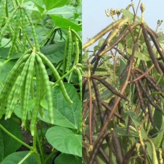 Tác dụng của đậu xanh được nhiều người đánh giá cao