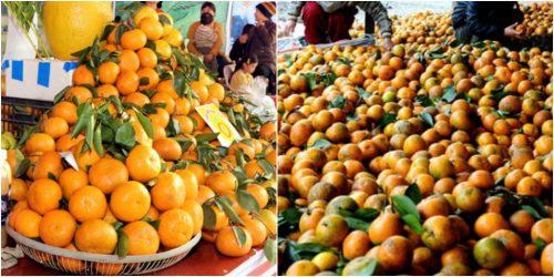 Giá cam trên thị trường khoảng 18.000 - 25.000 đồng/1kg
