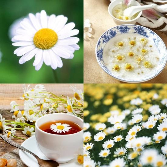 Tác dụng của cây cam cúc hoa giúp trị các chứng đau đầu, chóng mặt