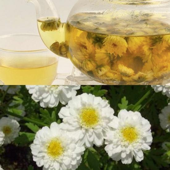 Cách dùng trà cam cúc hoa trị các chứng ù tai, nhức đầu