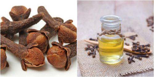 Cách bào chế đinh hương thành dạng khô và tinh dầu