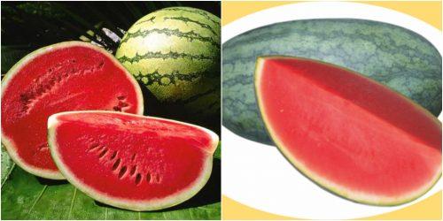 Tác dụng của quả dưa hấu giúp chữa bệnh rất tốt