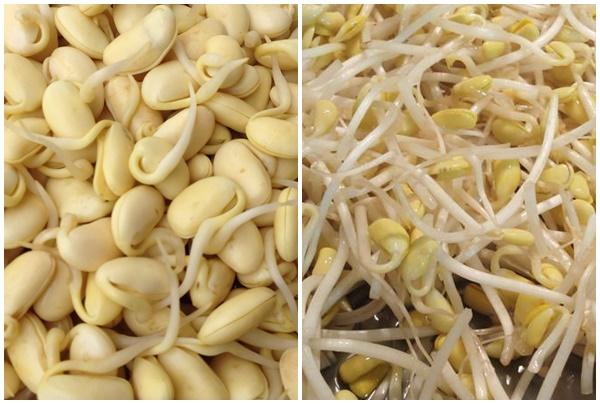 Giá đậu tương là món ăn nhiều người ưa chuộng.