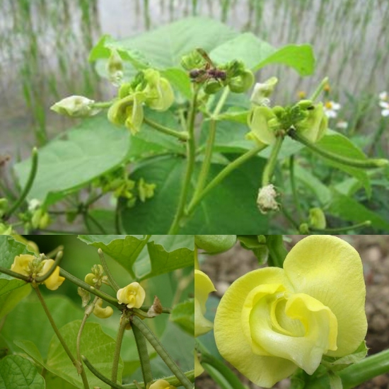 Công dụng chữa bệnh của đậu xanh được Đông và Tây y đánh giá cao