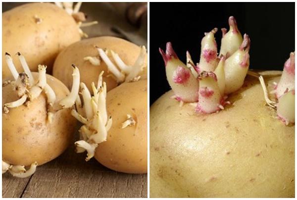 Tác dụng phụ của khoai tây mọc mầm ảnh hưởng đến sức khỏe.
