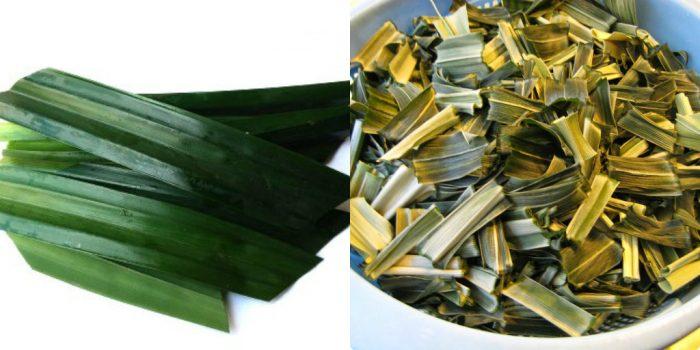 Lá dứa được dùng dưới 2 dạng là tươi và khô