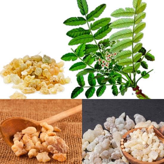 Tác dụng của nhũ hương trong điều trị sưng đau do ngoại thương