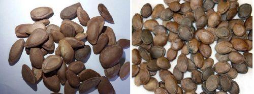 Qua lâu nhân chứa nhiều tinh dầu giúp nhuận tràng, thông tiện, thuận phế hóa đàm