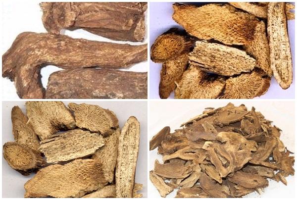 Tác dụng chữa bệnh hiệu quả của rễ quảng mộc hương.