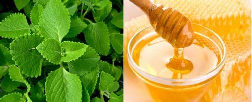 Cách chế biến rau tần kết hợp với mật ong để chữa các bệnh đường tiêu hóa.