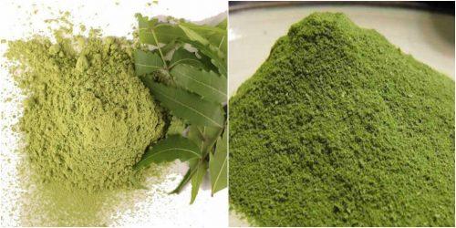 Cách sử dụng sầu đâu dạng bột giúp điều trị nhiều loại bệnh