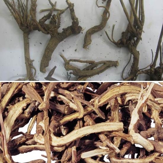 Tác dụng của rễ sài hồ chữa bệnh gì được nhiều người quan tâm