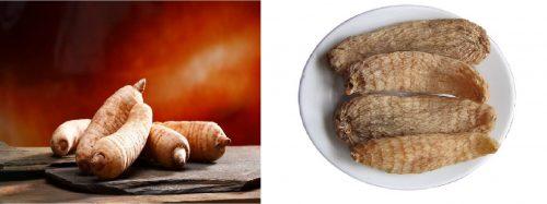 Hình ảnh củ thiên ma tươi (trái) và khô (phải)