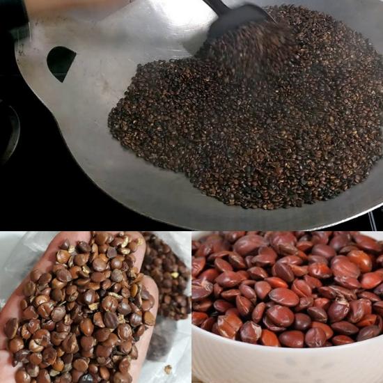 Cách chế biến toan táo nhân sau khi thu hái bằng phương pháp sao khô