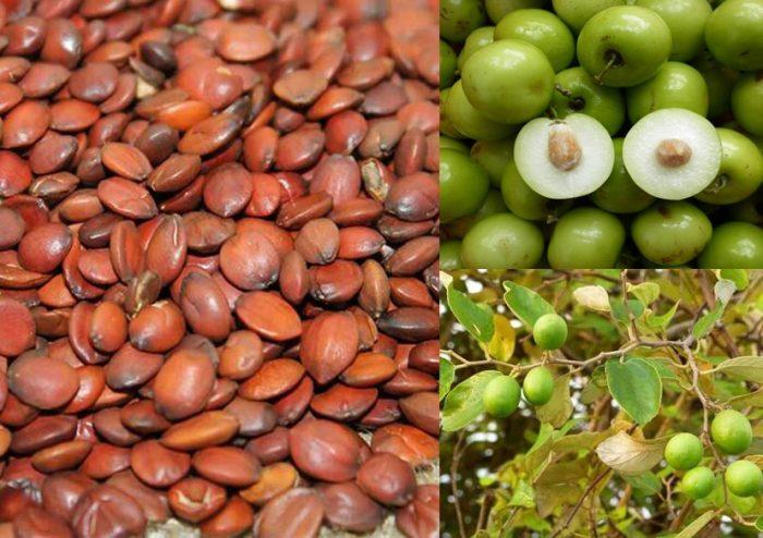 Toan táo nhân có tác dụng gì và cách dùng toan táo nhân hiệu quả