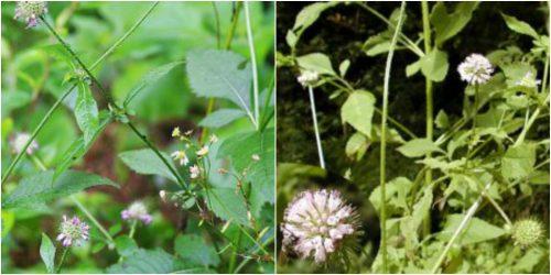 Hình ảnh hoa và lá tục đoạn