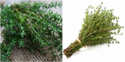 Tác dụng của xạ hương giúp chữa bệnh rất tốt