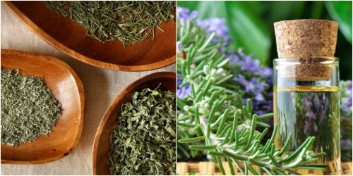 Cách bào chế cỏ xạ hương thành dạng khô và lấy tinh dầu