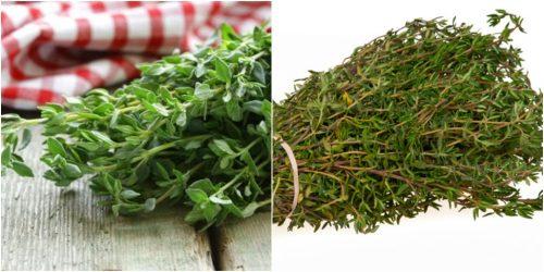 Cây xạ hương được bán nhiều trên thị trường