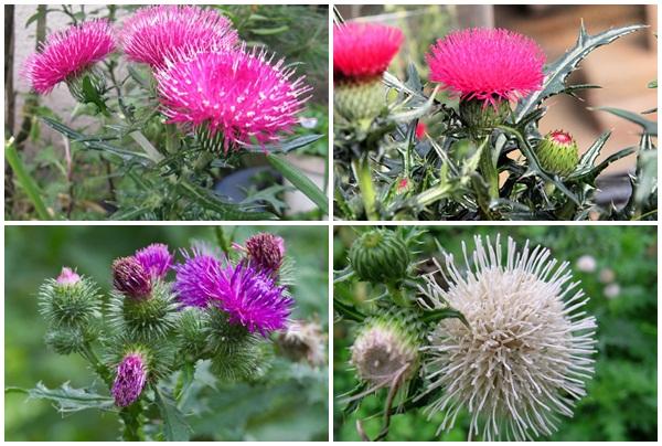 Đại kế gồm nhiều loại hoa với màu sắc nổi bật.