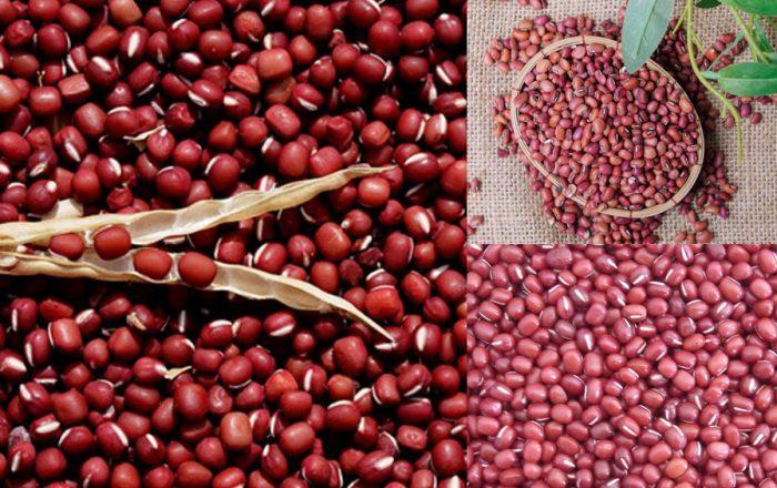 Đậu đỏ nhỏ với tác dụng của hạt đậu đỏ nhỏ và cách dùng hiệu quả