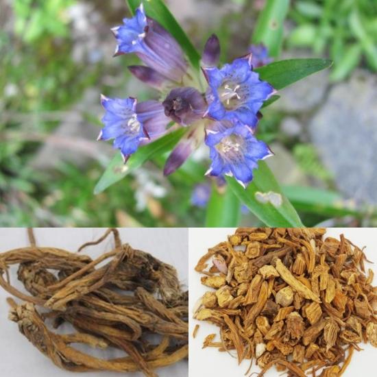 Tần giao là vị thuốc quý, được dùng nhiều trong các bài thuốc Đông y