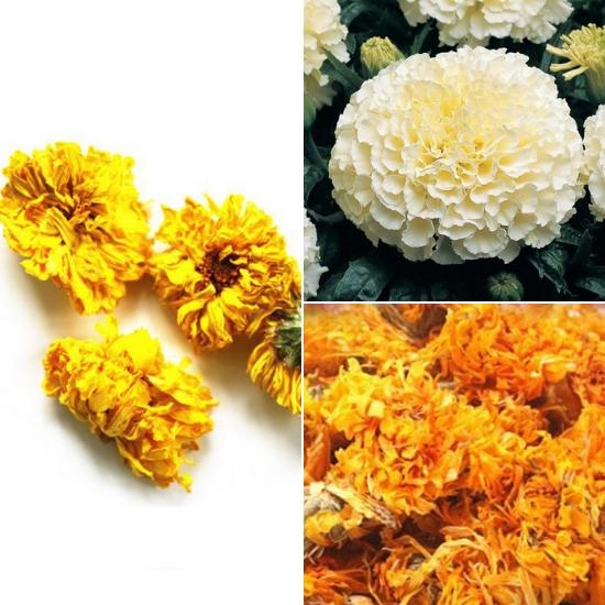 Tác dụng của hoa vạn thọ chữa bệnh gì được nhiều người quan tâm