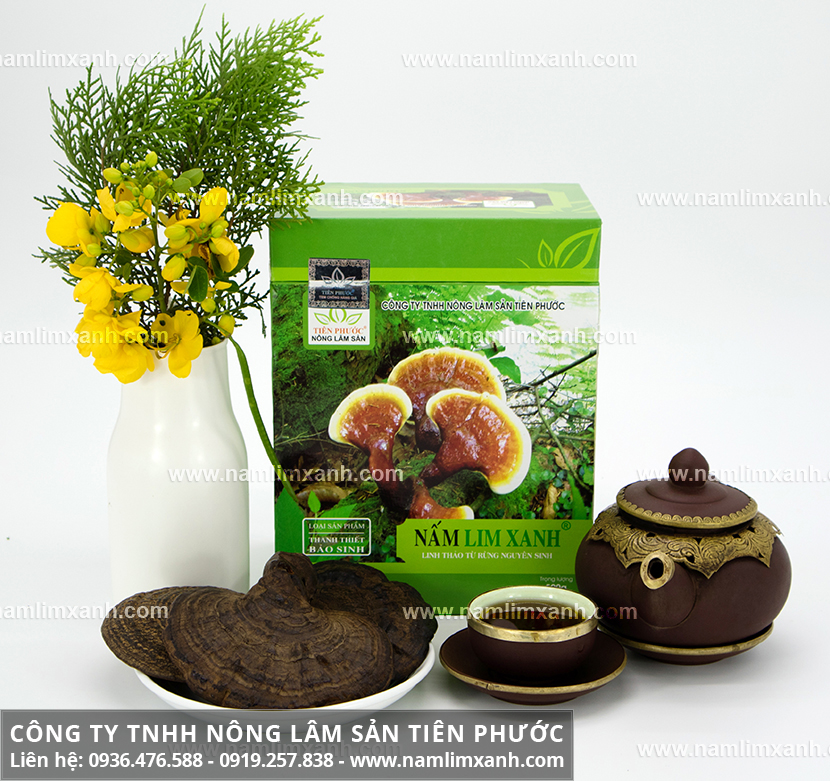 Các loại nấm lim xanh rừng tự nhiên với cây nấm lim xanh các loại giá