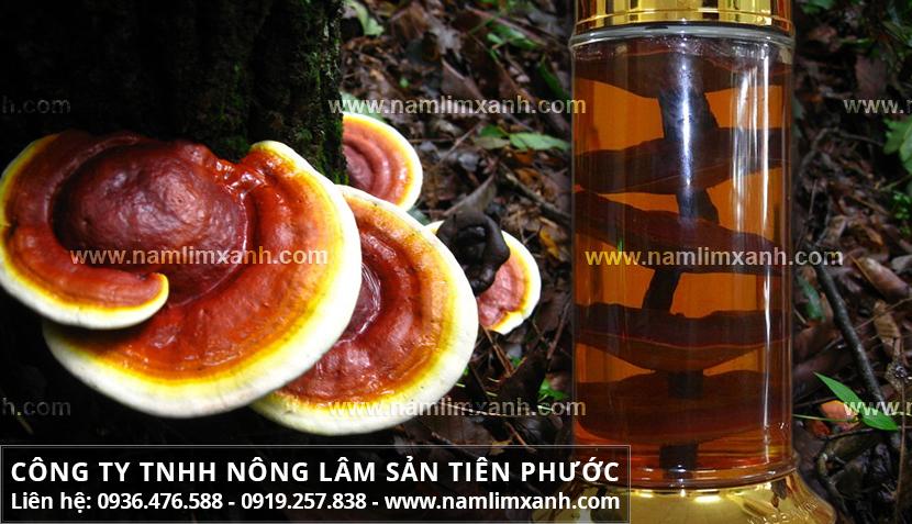 Cách ngâm nấm lim và các bước ngâm rượu cây nấm lim rừng tự nhiên