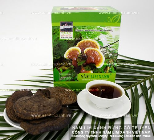 Tác dụng của nấm lim xanh Quảng Nam chữa bệnh rất tốt