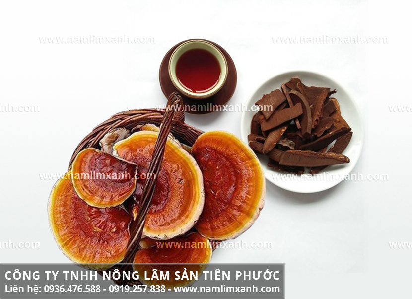 Cách sử dụng nấm lim xanh Quảng Nam với cách nấu nấm lim xanh rừng