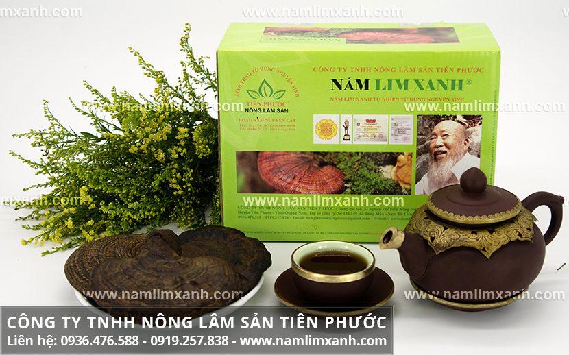 Công ty Nấm lim xanh Quảng Nam và thông tin cần biết về nấm lim rừng