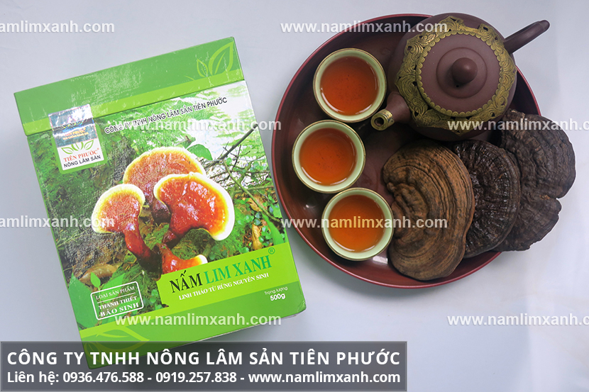 Giá nấm lim xanh của Công ty Tiên Phước đảm bảo cây nấm lim xanh tốt