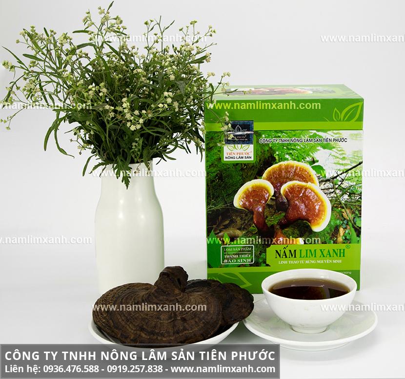 Hình ảnh nấm lim xanh tự nhiên và nấm trồng với hình dáng nấm lim rừng