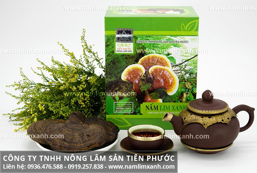 Mua nấm lim xanh Quảng Nam ở đâu TPHCM là tốt nhất và địa chỉ mua nấm lim
