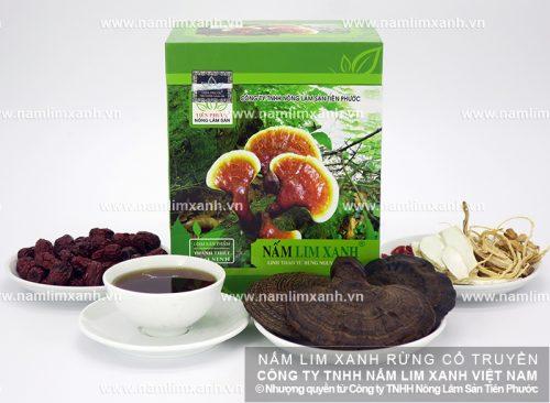 Nấm lim xanh Tiên Phước được thu hái từ rừng tự nhiên
