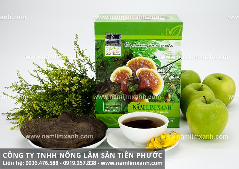 Nấm lim xanh chữa bệnh và thành phần dược chất của nấm lim xanh rừng