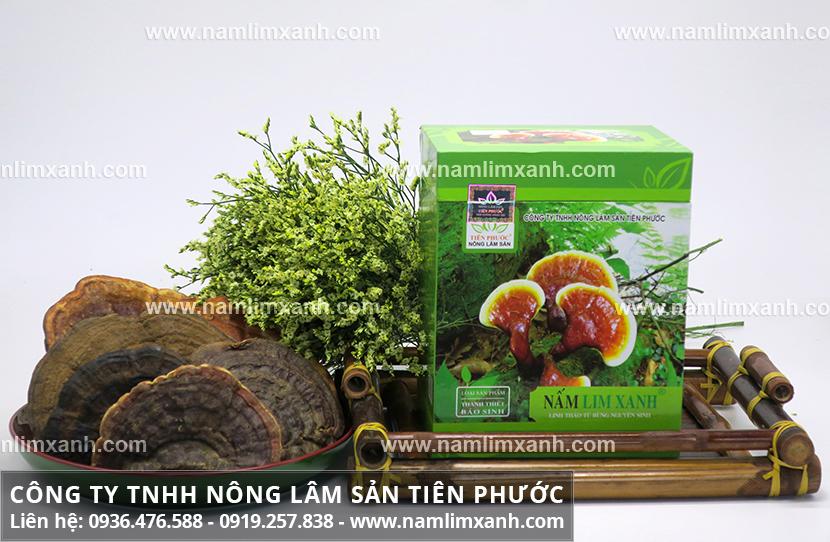 Nấm lim xanh Đà Nẵng với tác dụng chữa bệnh của nấm lim xanh tự nhiên