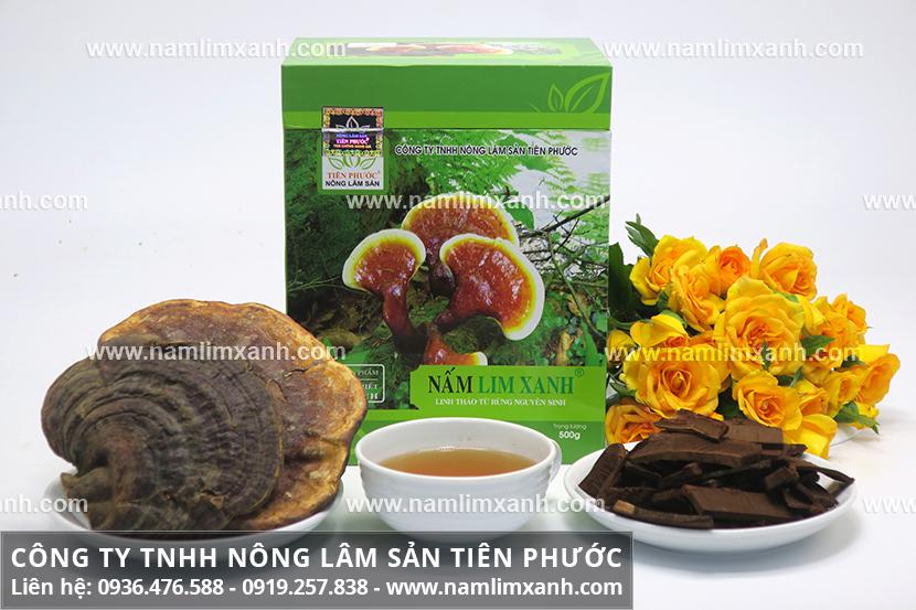 Nấm lim xanh Nông Lâm có tác dụng chữa ung thư và nấm lim rừng tác dụng