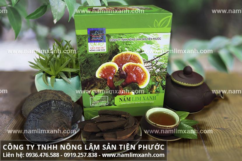 Nấm lim xanh Quảng Nam chính gốc chữa bệnh gan và tác dụng nấm lim