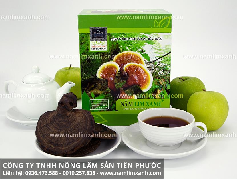 Nấm lim xanh Quảng Ninh và tác dụng chữa bệnh của nấm lim Quảng Ninh