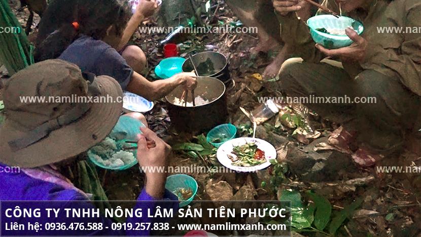 Phân biệt nấm lim xanh và cách phân biệt nấm cây lim xanh rừng-trồng