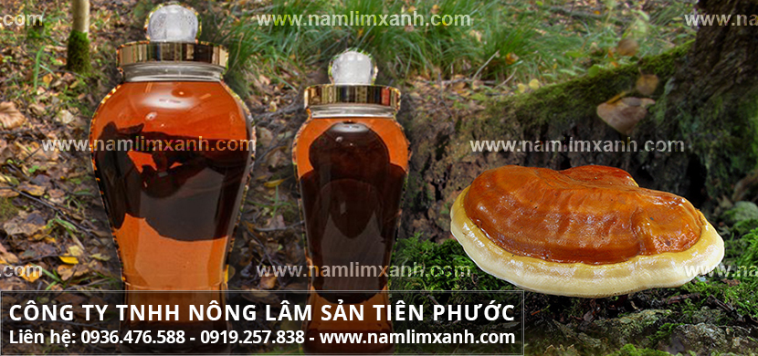 Rượu nấm lim xanh và phương pháp dùng cây nấm lim rừng ngâm rượu