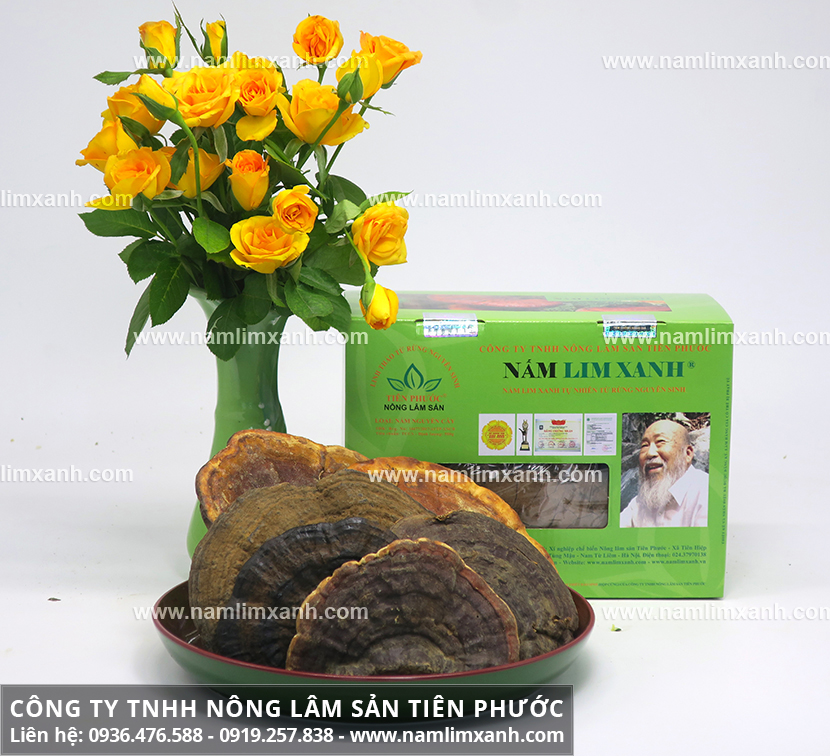 Tác dụng của nấm lim xanh Quảng Nam giảm mỡ máu và lợi ích nấm lim rừng